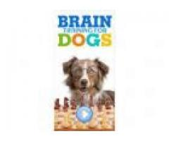"""Develop your Dog's """"Hidden Intelligence"""" With This Training System!"""