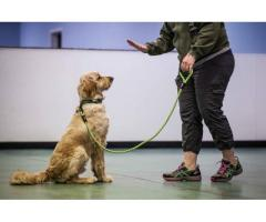 SECRETS TO DOG TRAINING +6 DAY FREE COURSE
