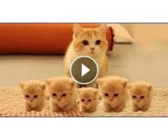 Cute Pets And Funny Animals Compilation