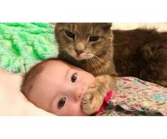 Baby and Cat Fun and Cute