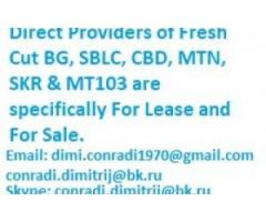 Direct Providers of Fresh Cut BG, SBLC and MTN