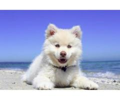 Dog training srecrets ¨they¨ don`t want you to know about