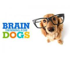 Super easy and affordable Dog Training Course